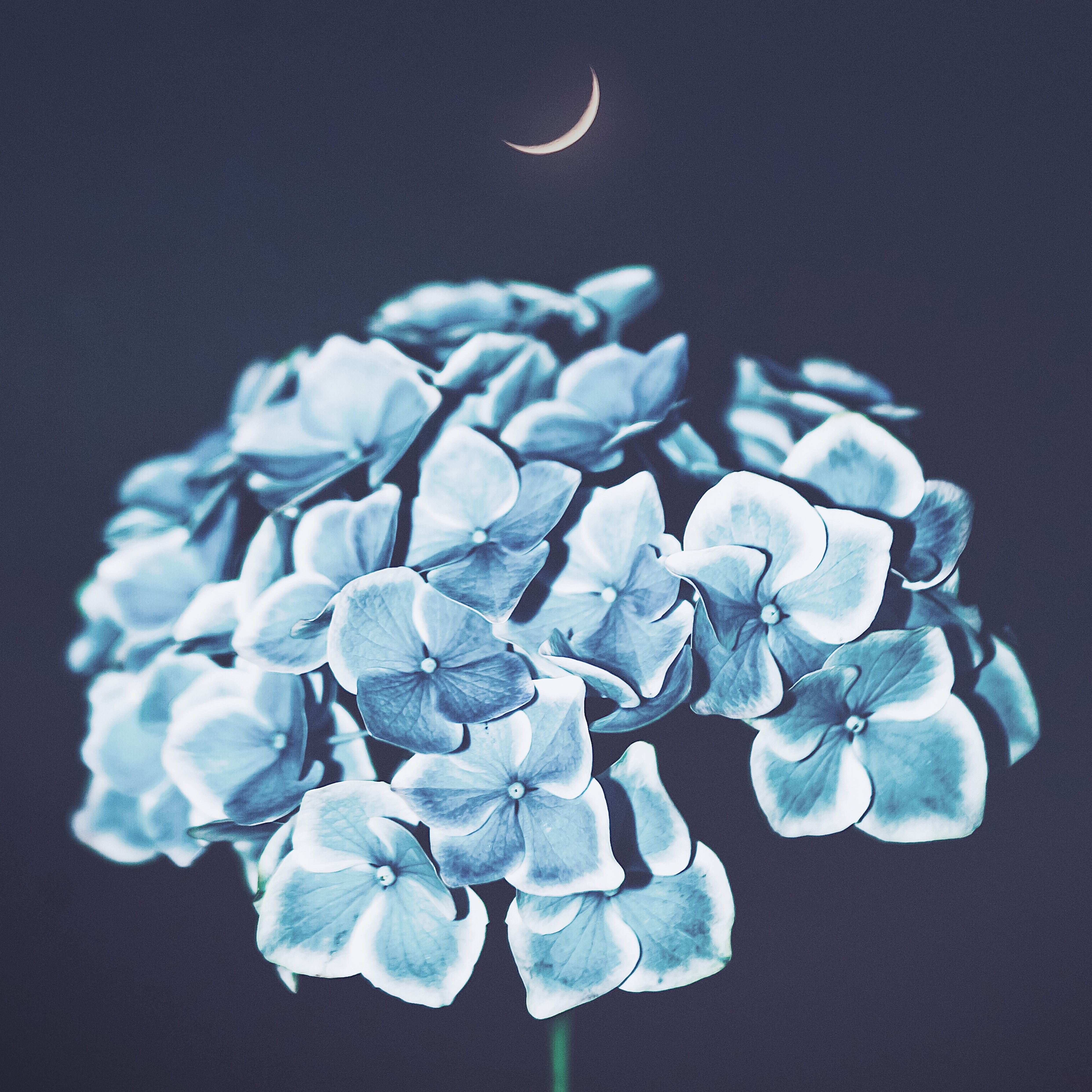 Akira Kosemura - In Moonlight EP